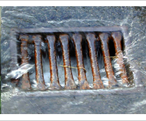 Biological Drain and Sewer Treatment